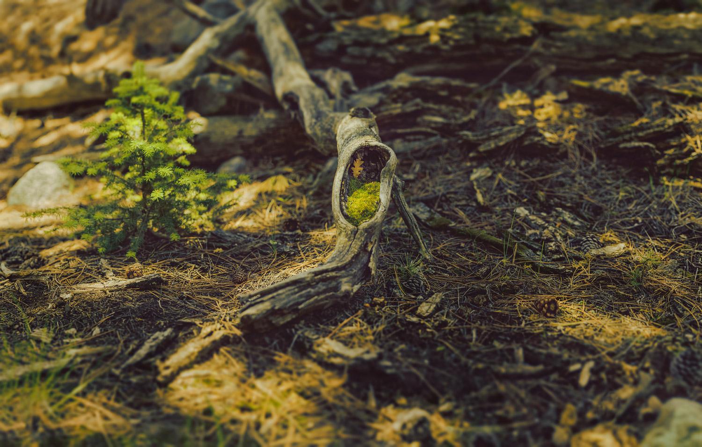 Mossy stump panorama