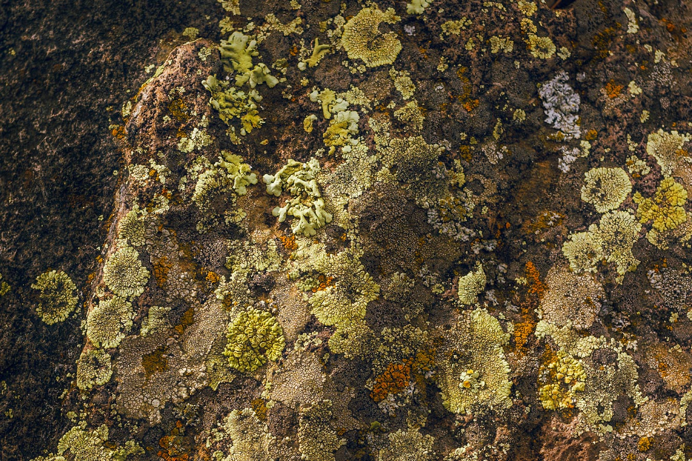 Lichen rock by Abreu