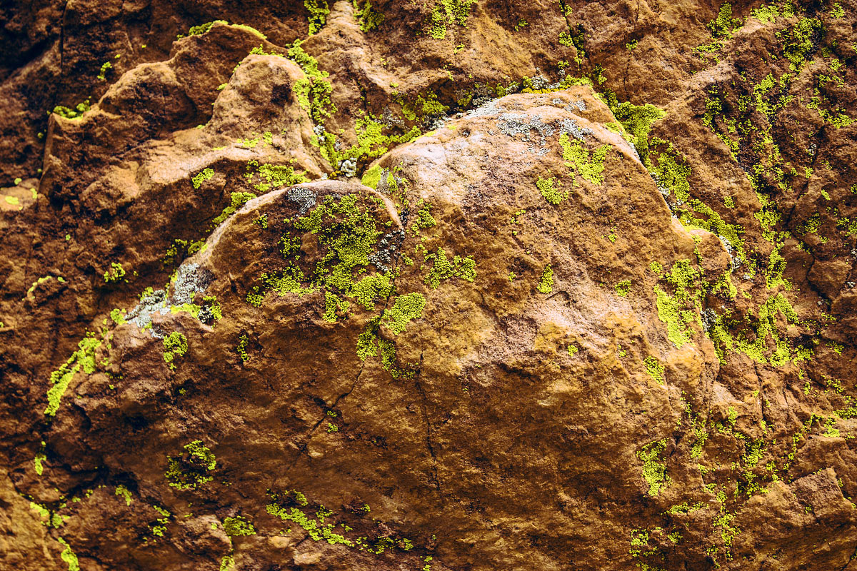 Lichen on rock at the Notch at Philmont Scout Ranch