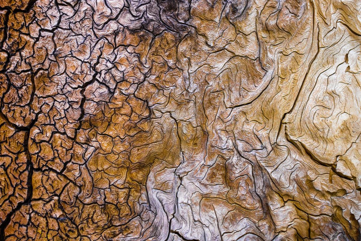 Sun worn wood texture.