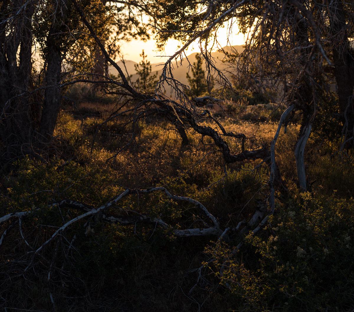 Scrub oak and setting sun, the colors of California.