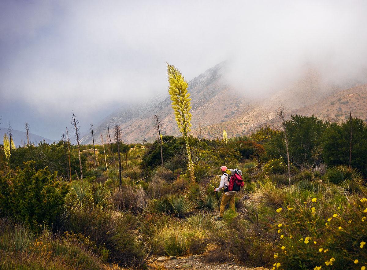 Adam admiring an agave bloom, mile ~347.