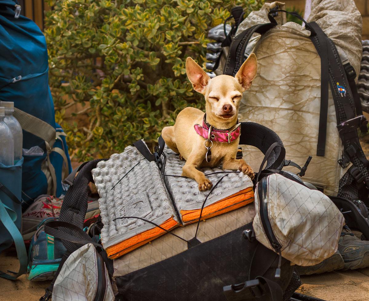"""Tiny"" the dog at Hiker Heaven."