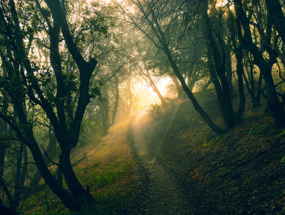 Shafts of light penetrate the deep scrub on a misty morning, mile 464.