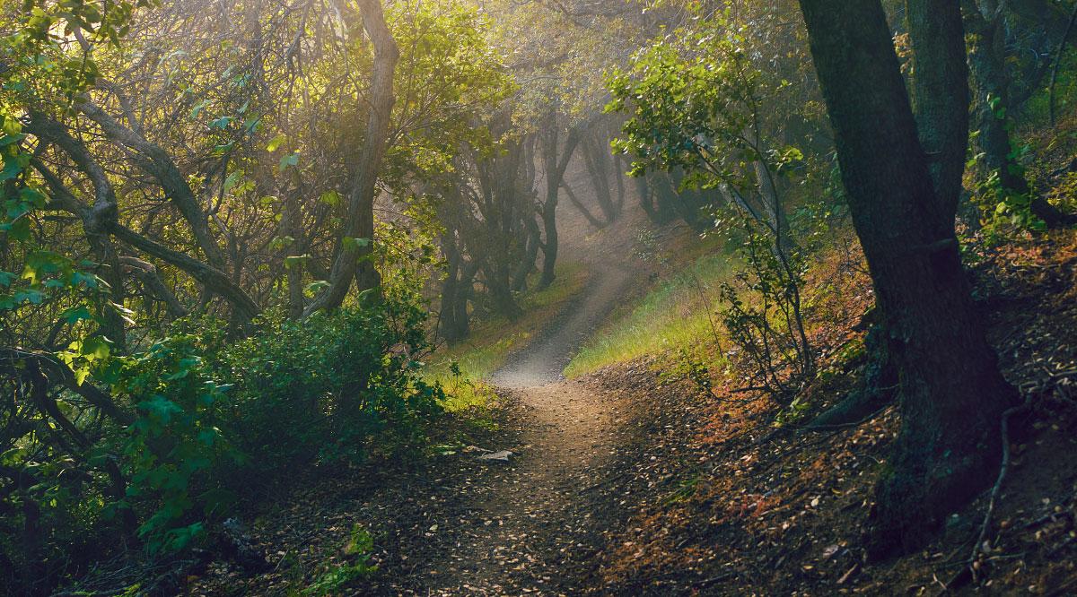 A foggy, mysterious trail, mile 464.