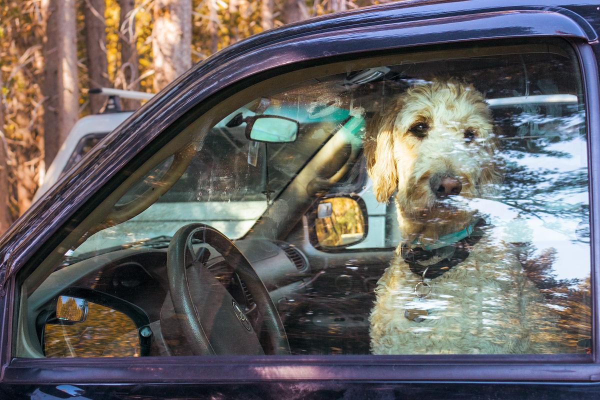 forlorn-dog-in-a-car.jpg