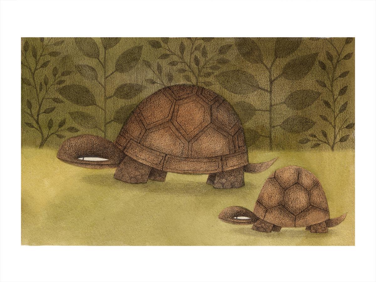 turtles_color2.jpg