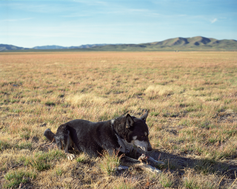 Prairie Dog  © Adrain Chesser