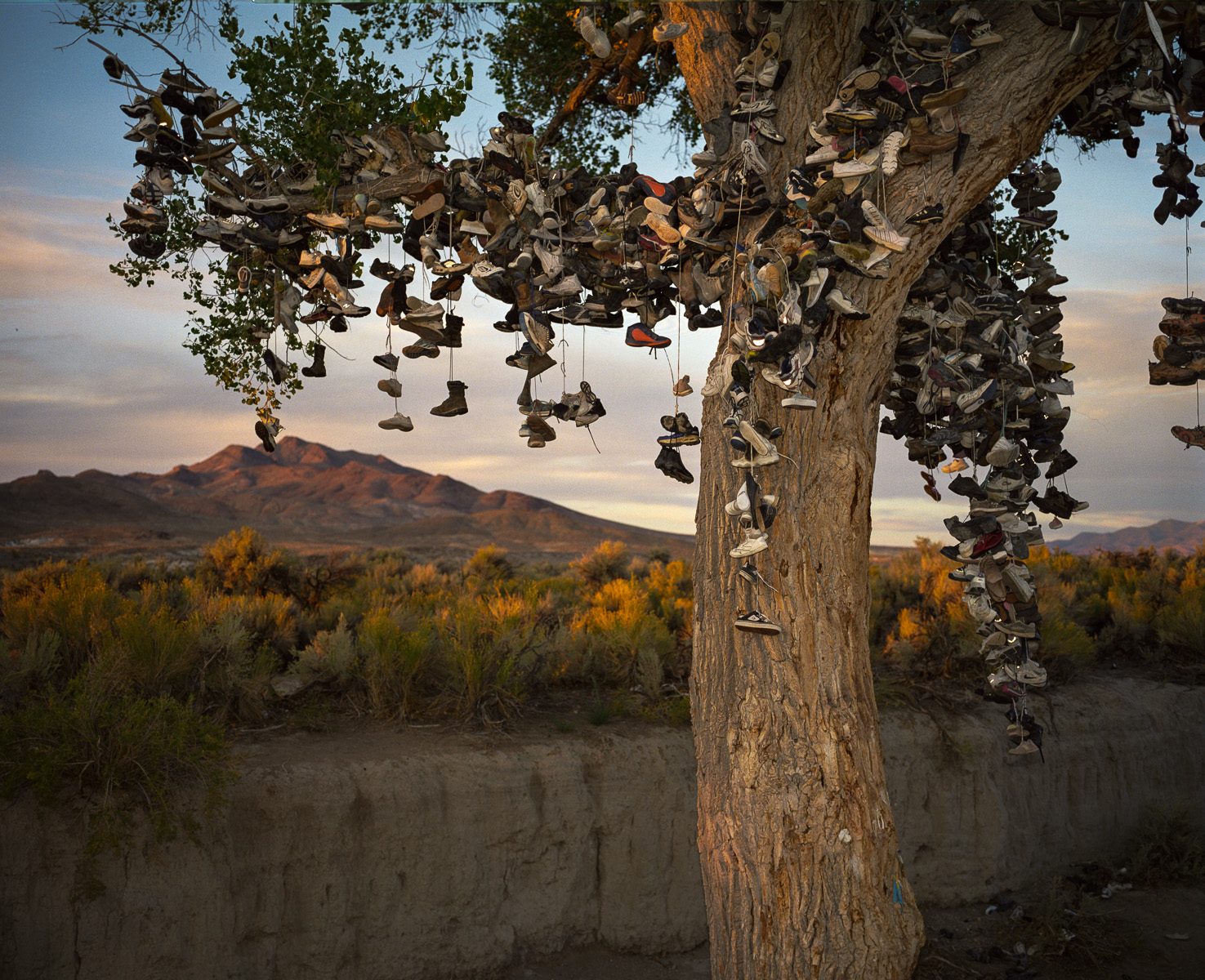 Shoe Tree  © Adrain Chesser
