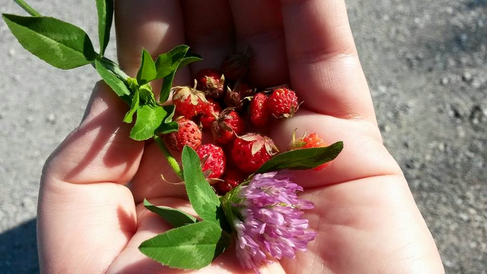 berriesnclover.jpg