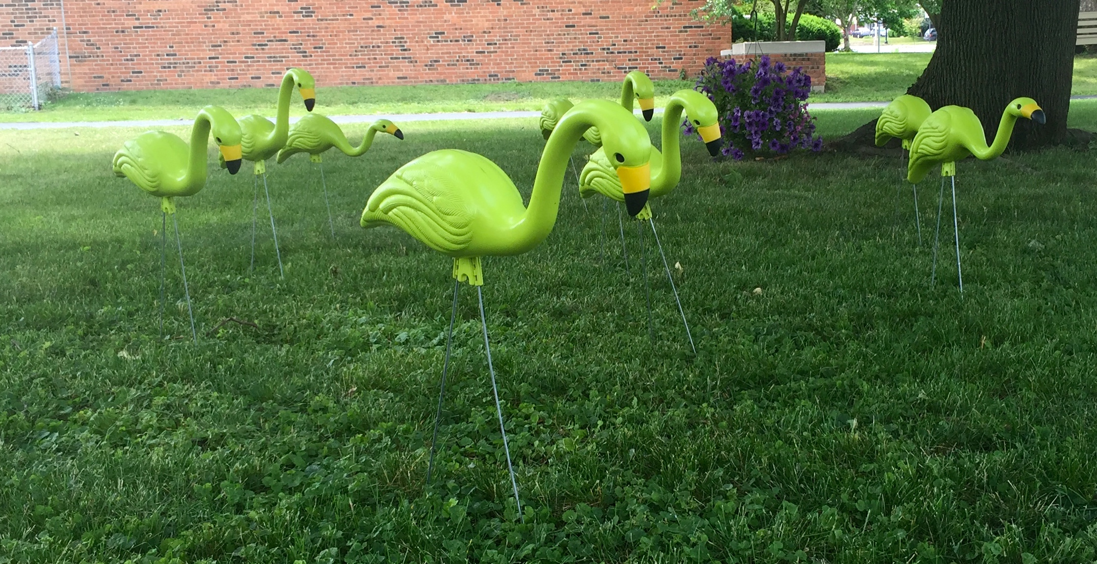 We looked for the Green Flamingos at the Westgate Home & Gardent Tour!