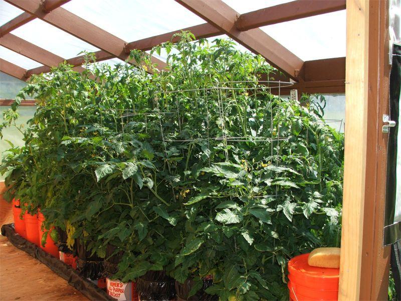 greenhouse 0714.jpg