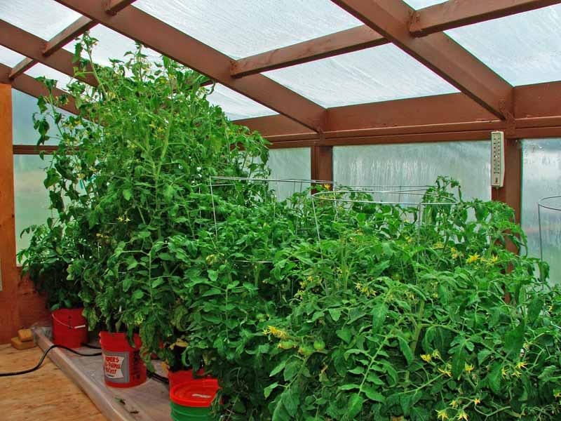 greenhouse 072611.jpg