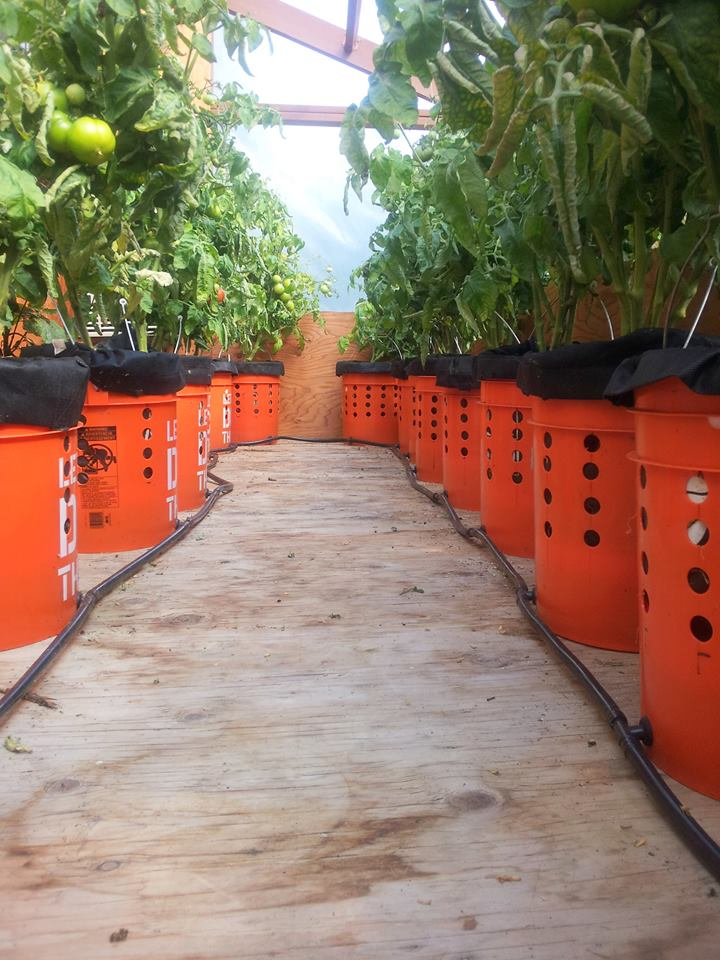 Grow Buckets 2014.jpg