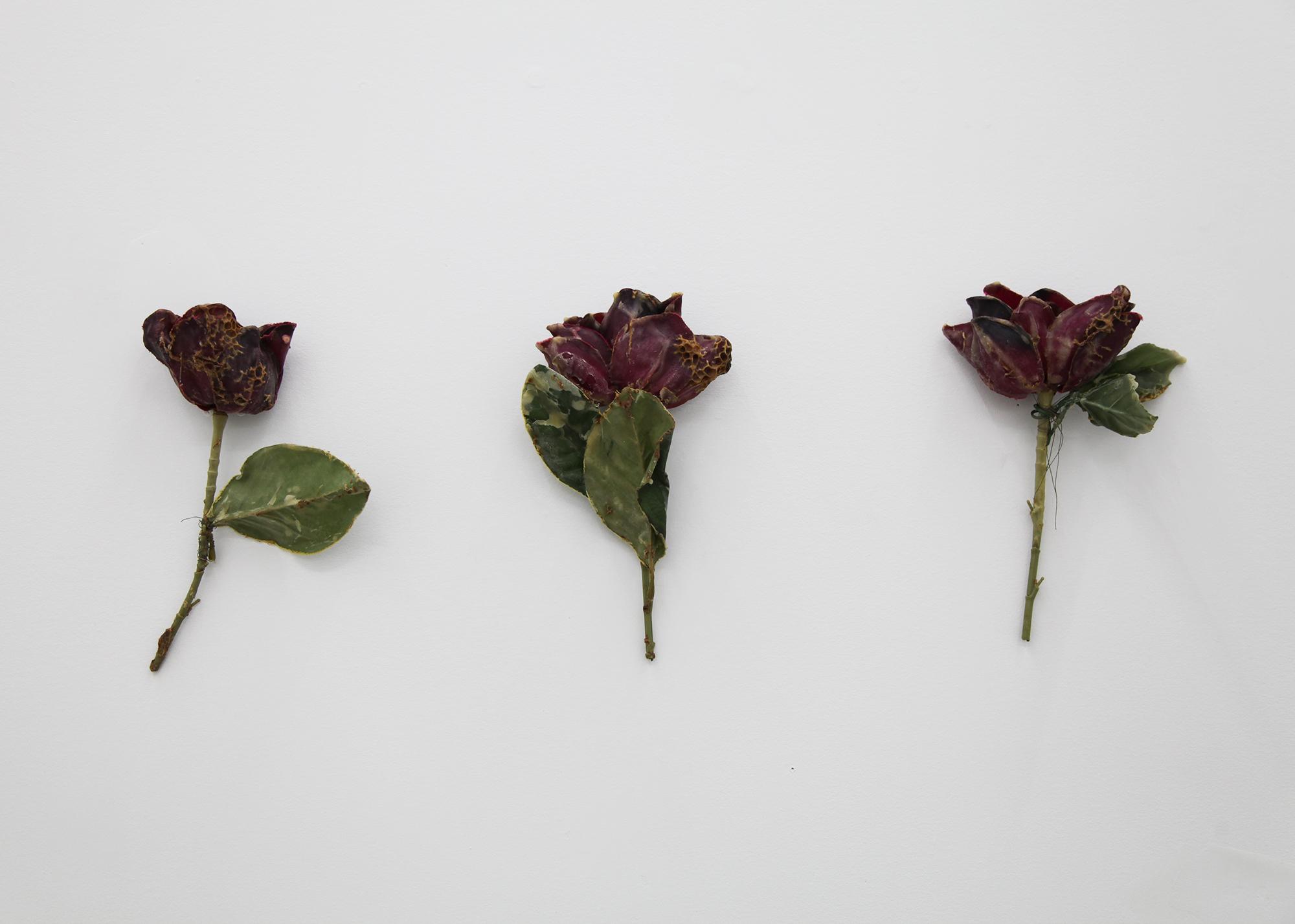 Silk Rose to the Honeybees.JPG