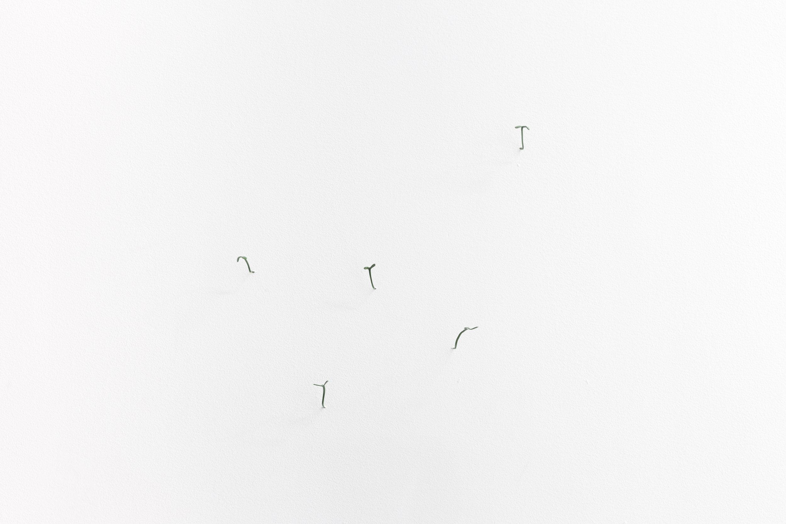 freshlycut_softlybound-20.jpg