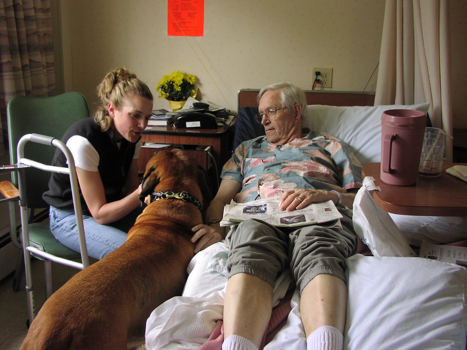 Positive feedback from his handler Monica helps therapy dog Marley manage a tight situation. Marley is a Bullmastiff.