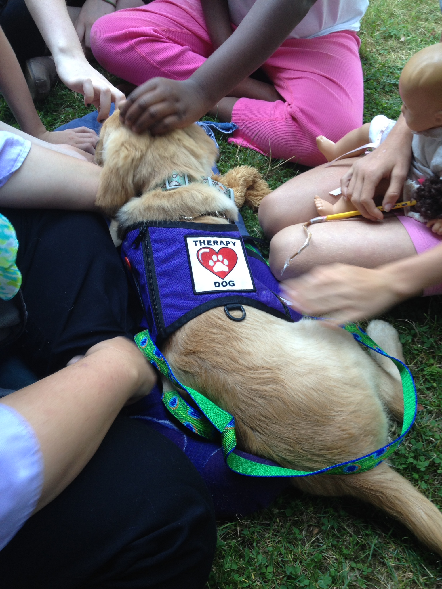 Therapy puppy Orla interacts with kids. Orla is a Golden Retriever.