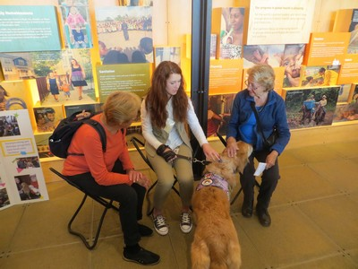 This is a classic therapy dog situation where a therapy dog is visiting with multiple people in a public environment.