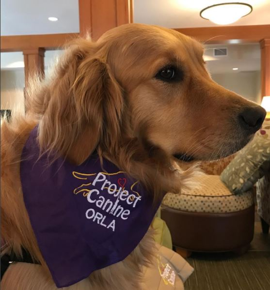 Orla in her personalized Project Canine bandana. Orla is a Golden Retriever.