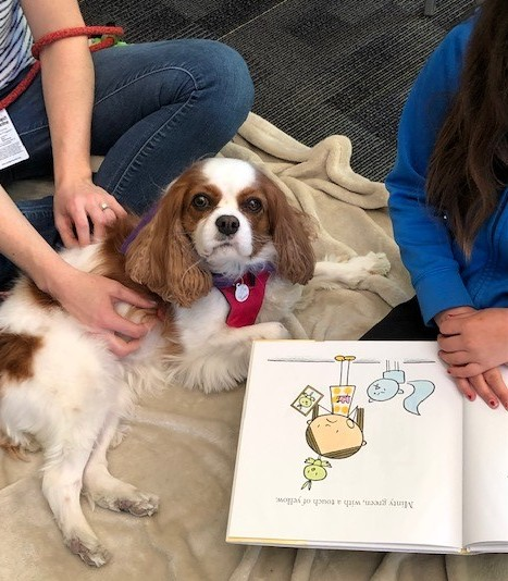 Therapy Dog Buster does a variety of visits including Bow Wows and Books. Buster is a Cavalier King Charles Spaniel.