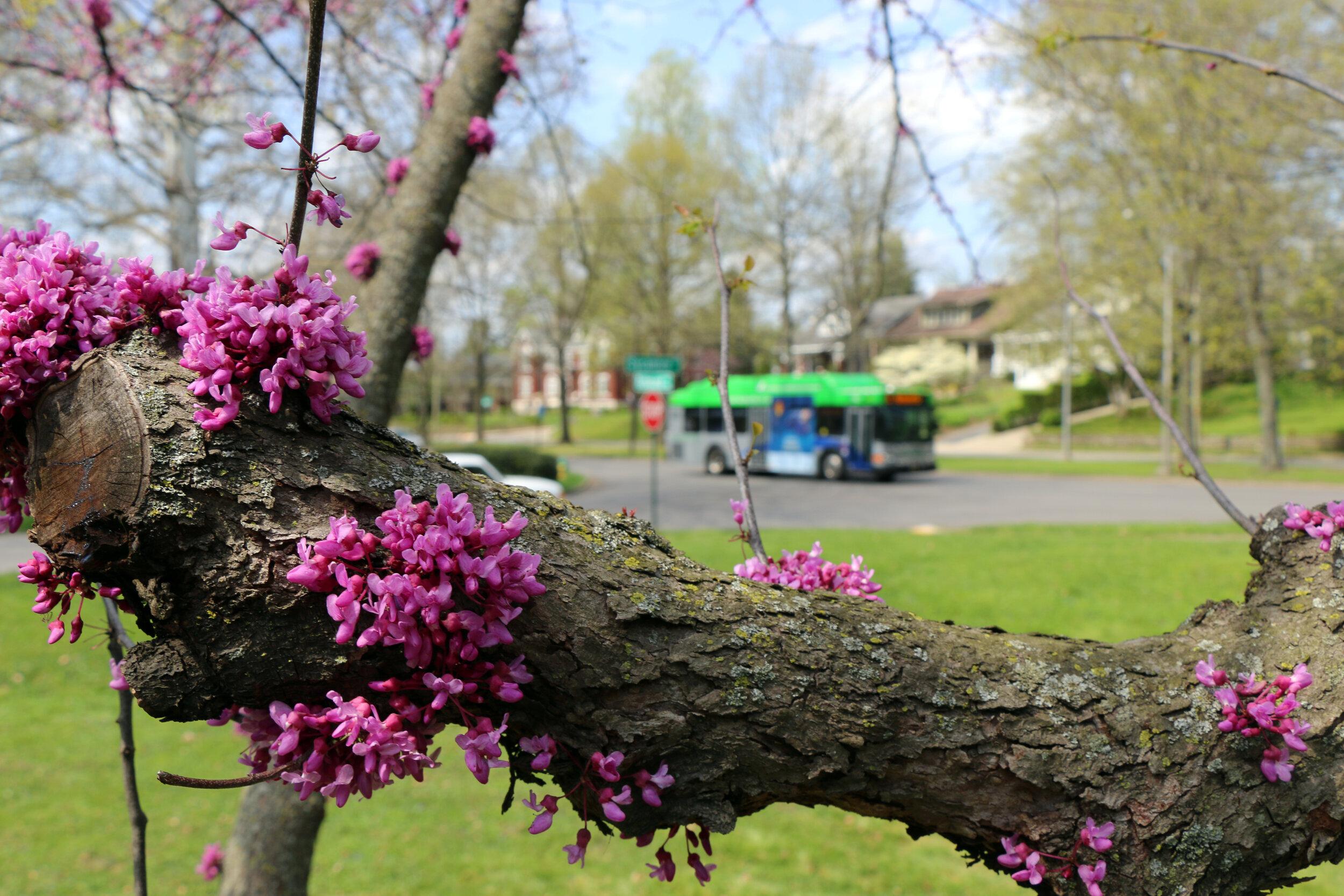 Bus_Flowers.JPG