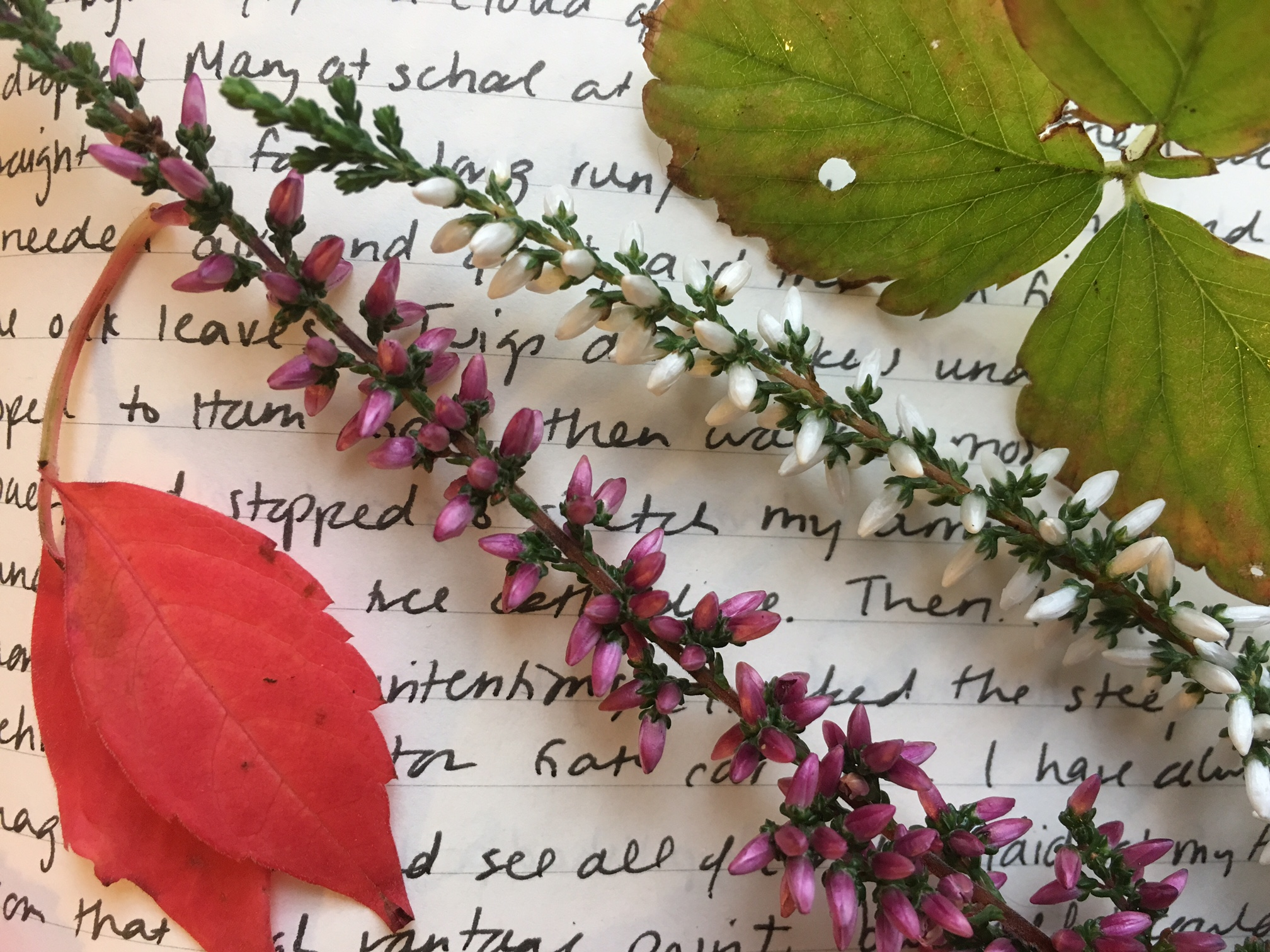writing in autumn