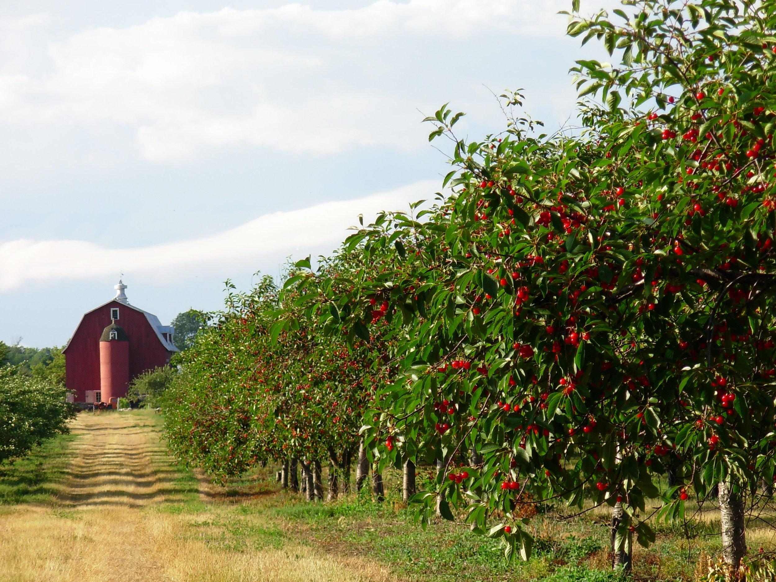 Lautenbach's Orchard just outside Fish Creek
