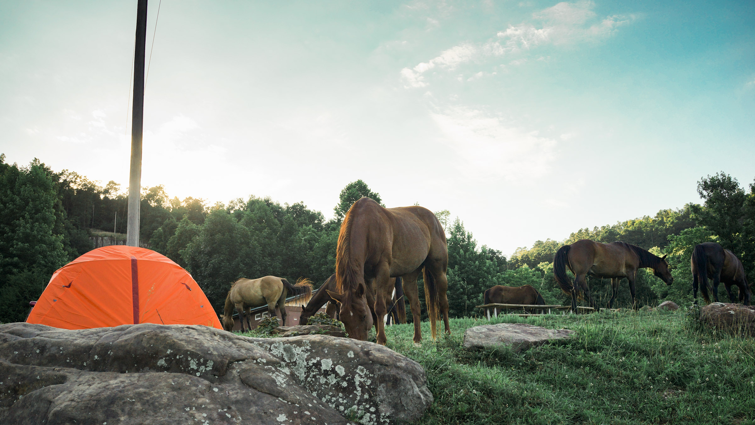 Horses, goats, skunks, squirrels can be walking around your tent and that is normal.