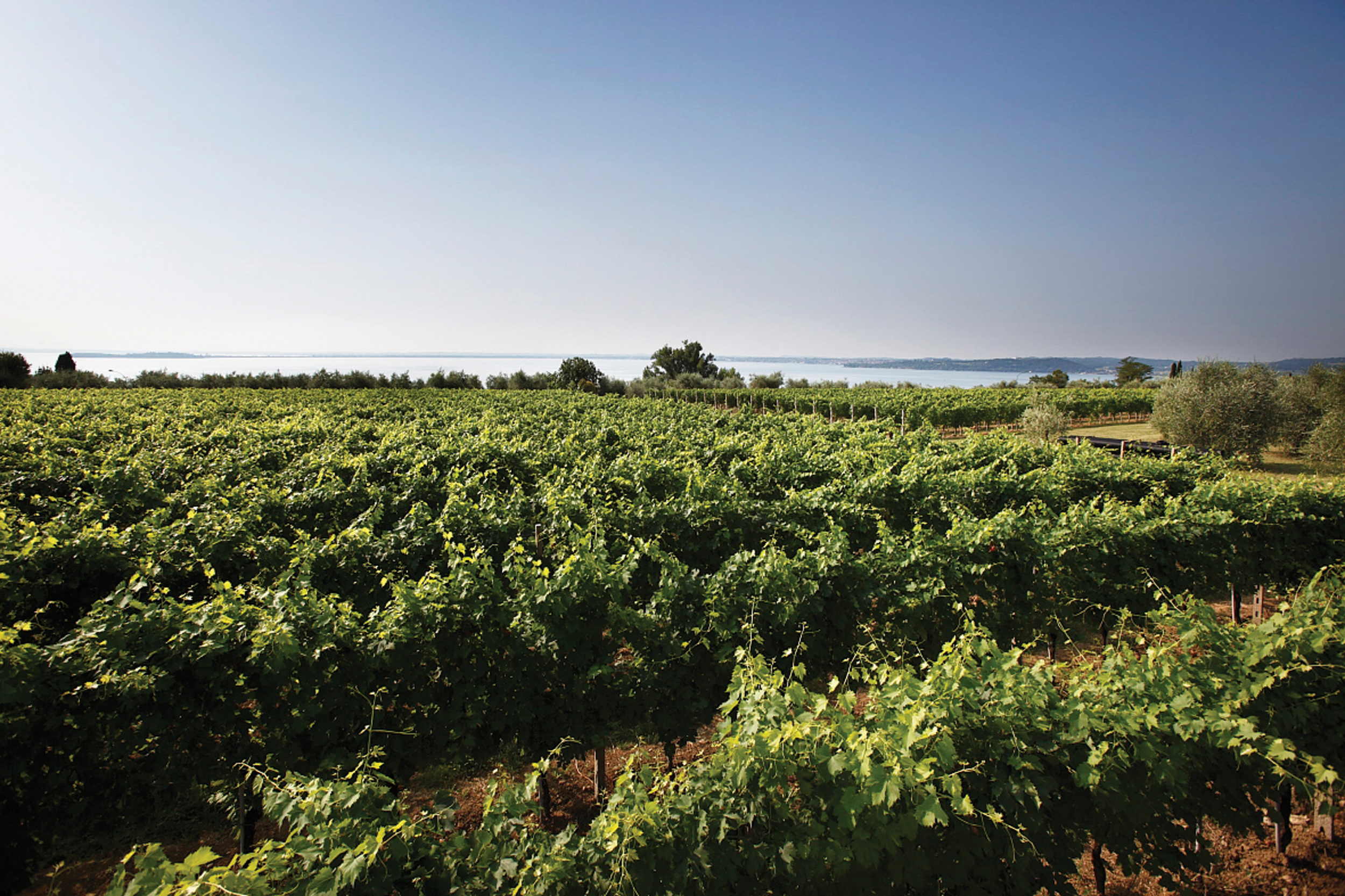 Vivaio Peschiera Del Garda region — consorzio tutela lugana doc