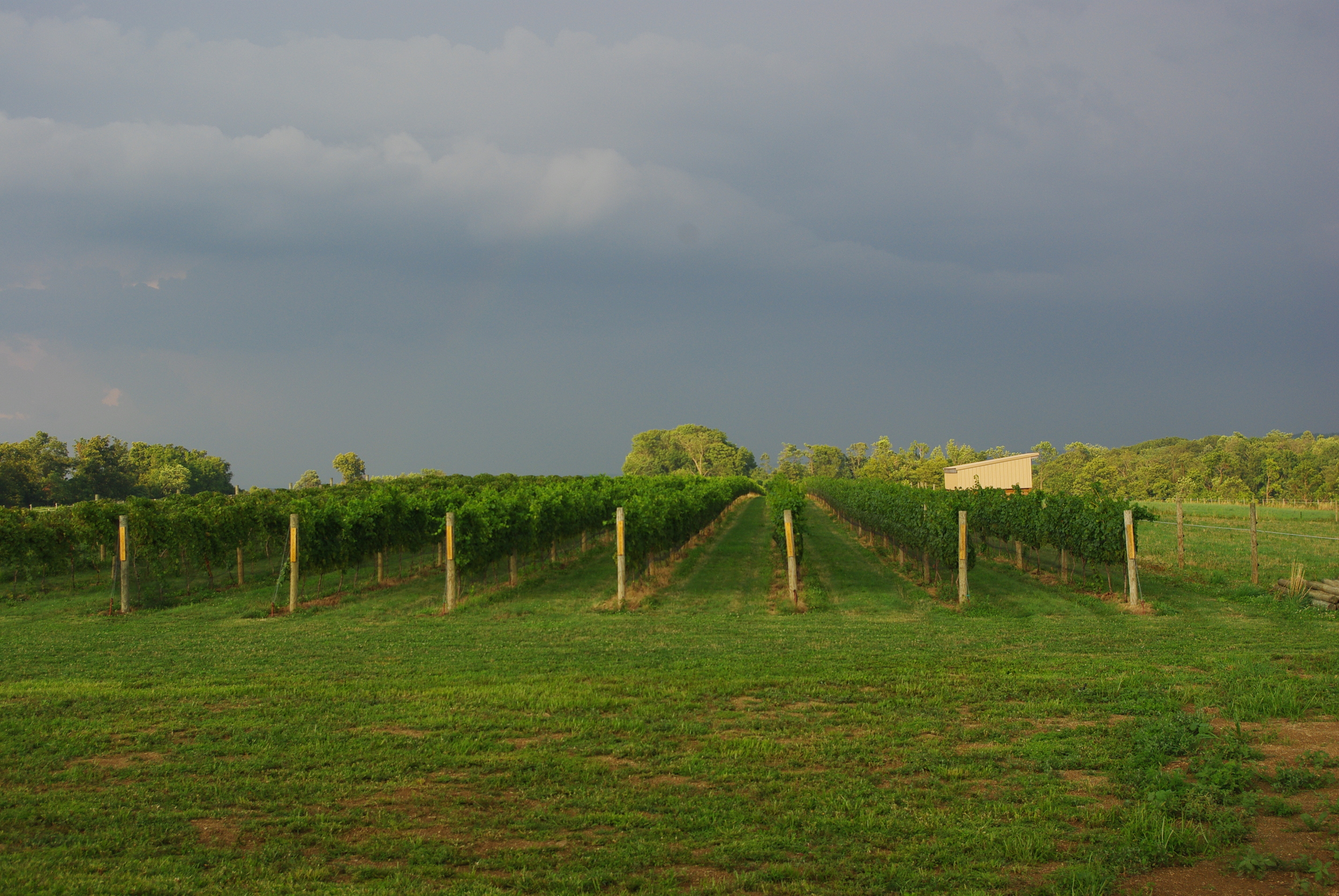 Vineyard and Storm.JPG