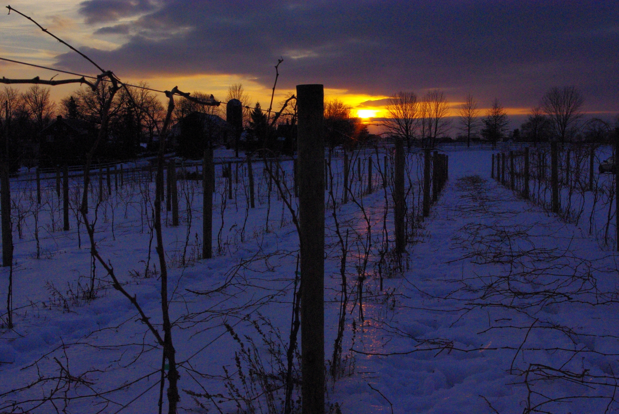 winter Sunset 3.JPG
