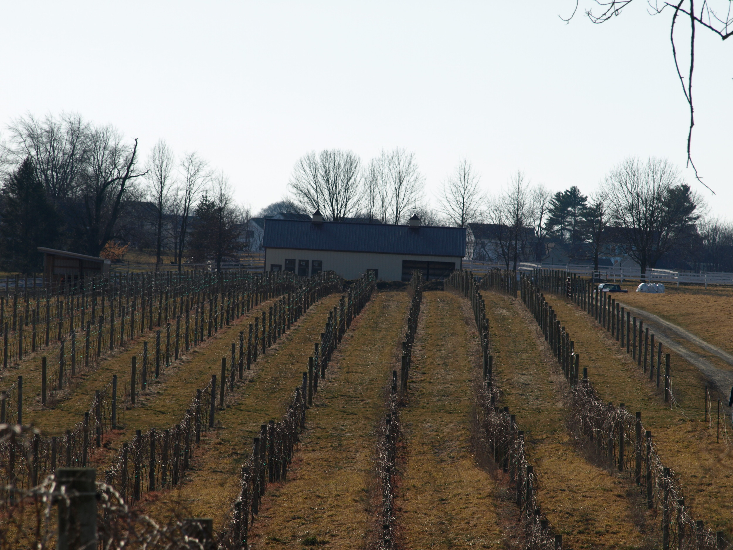 New Winery 2012 Opening.JPG