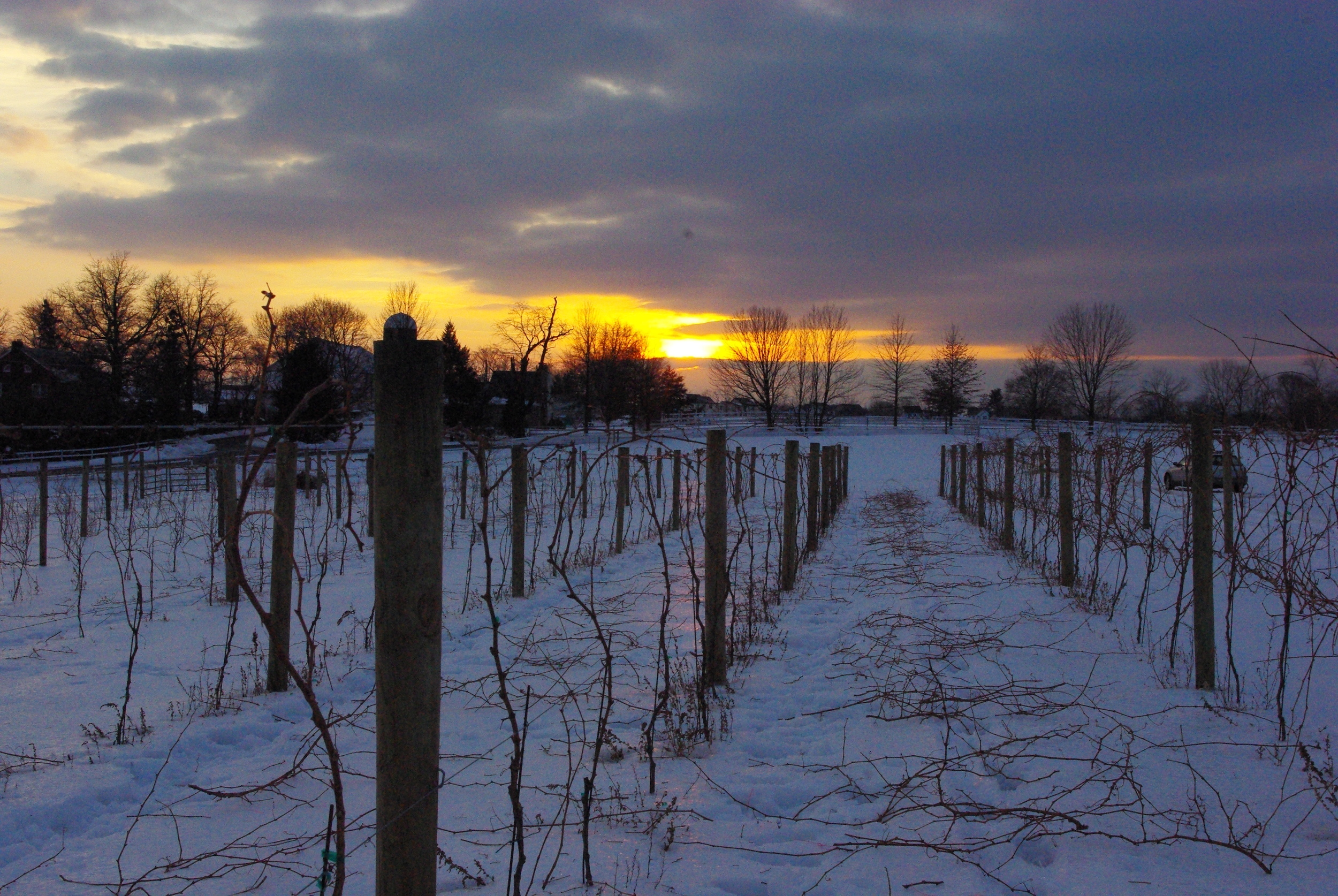 Winter sunset 4.JPG