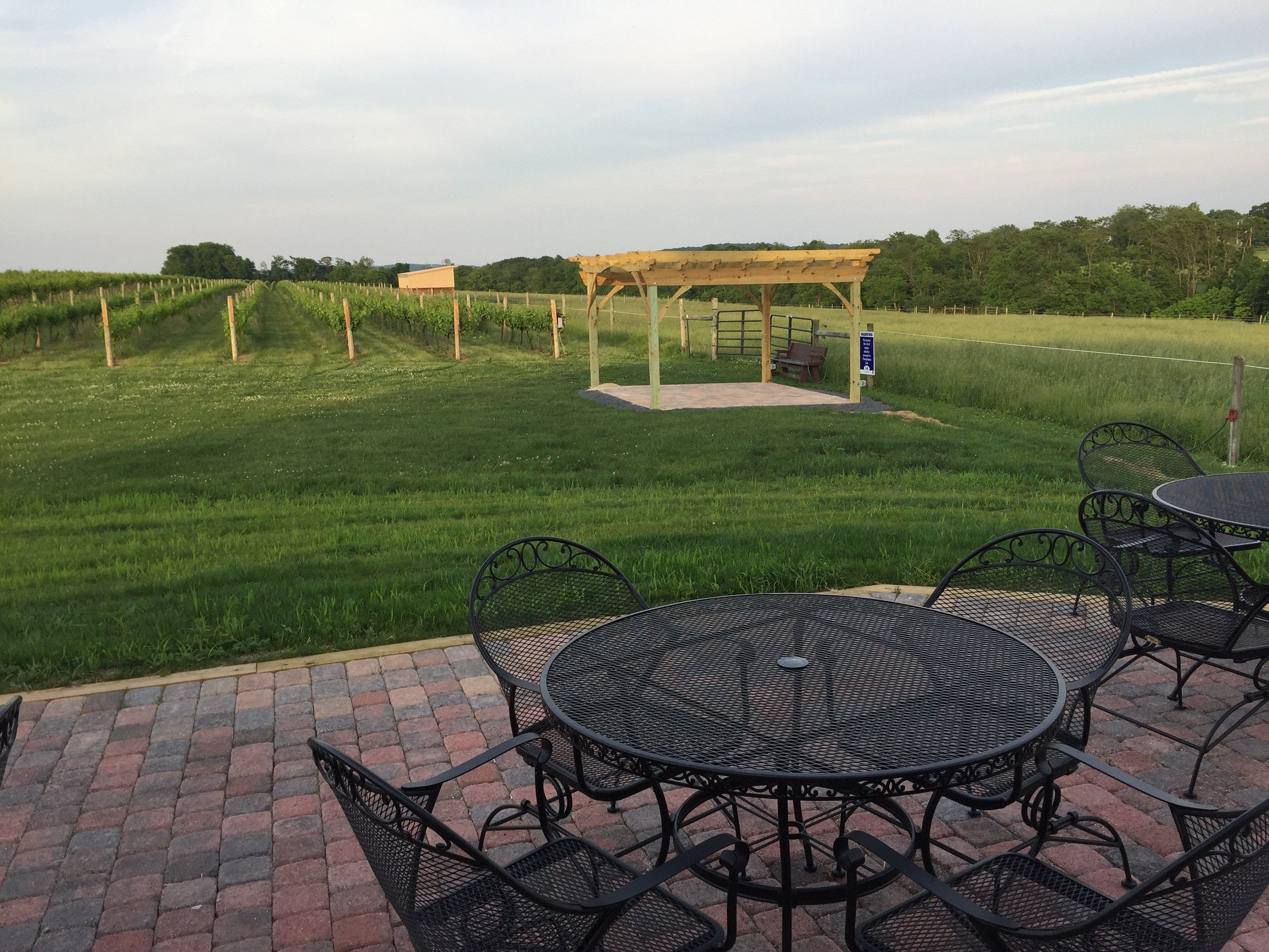 The view from our back patio overlooking our vineyards.