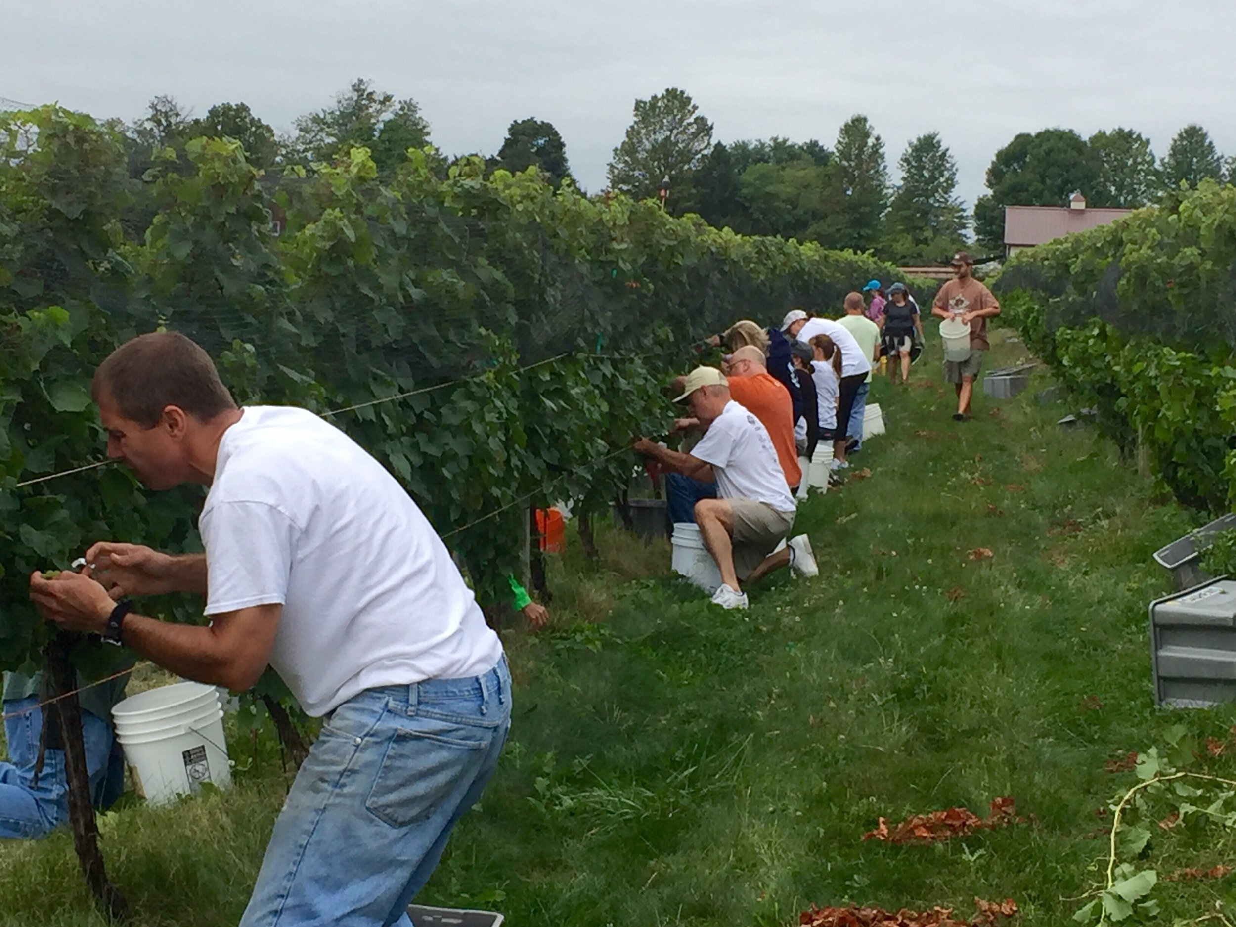 Half our picking crew