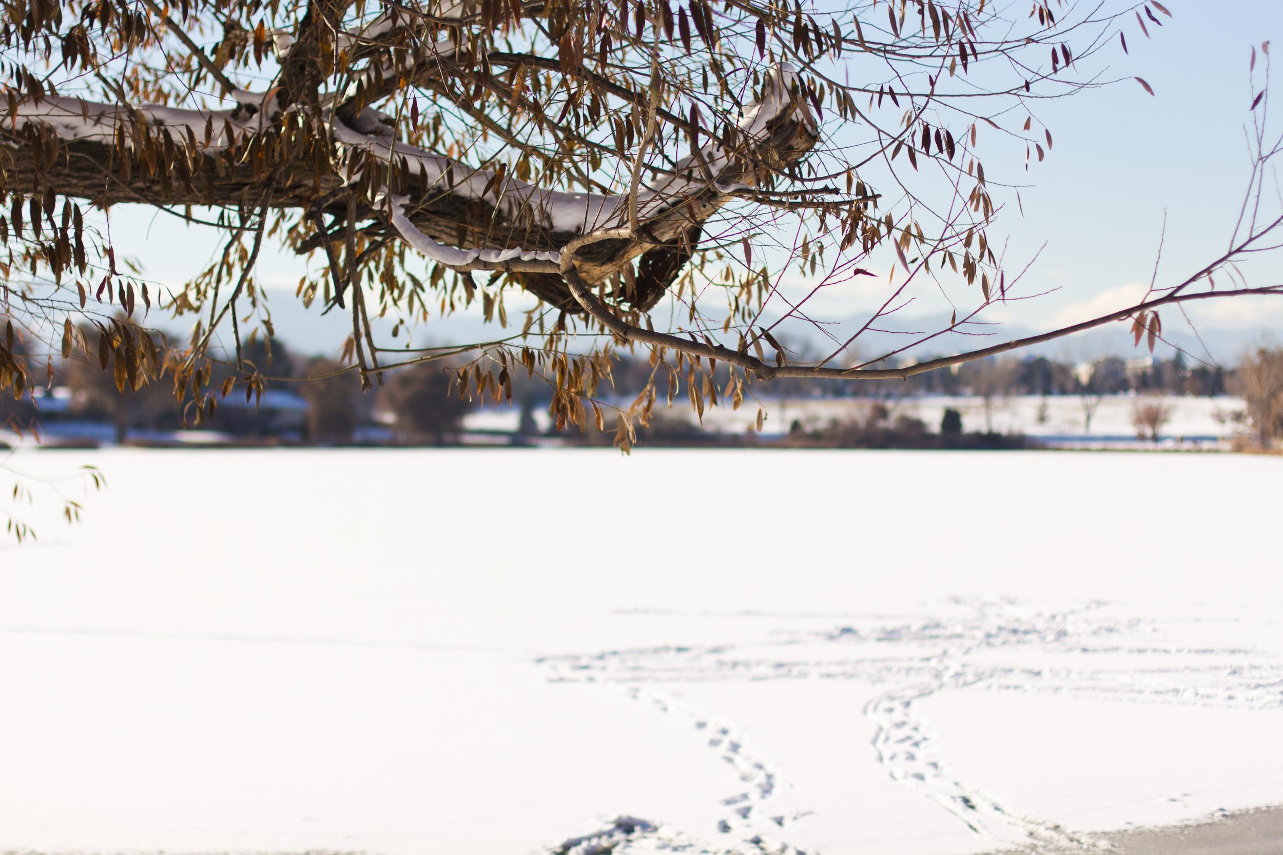 Colorado lake engagement shoot