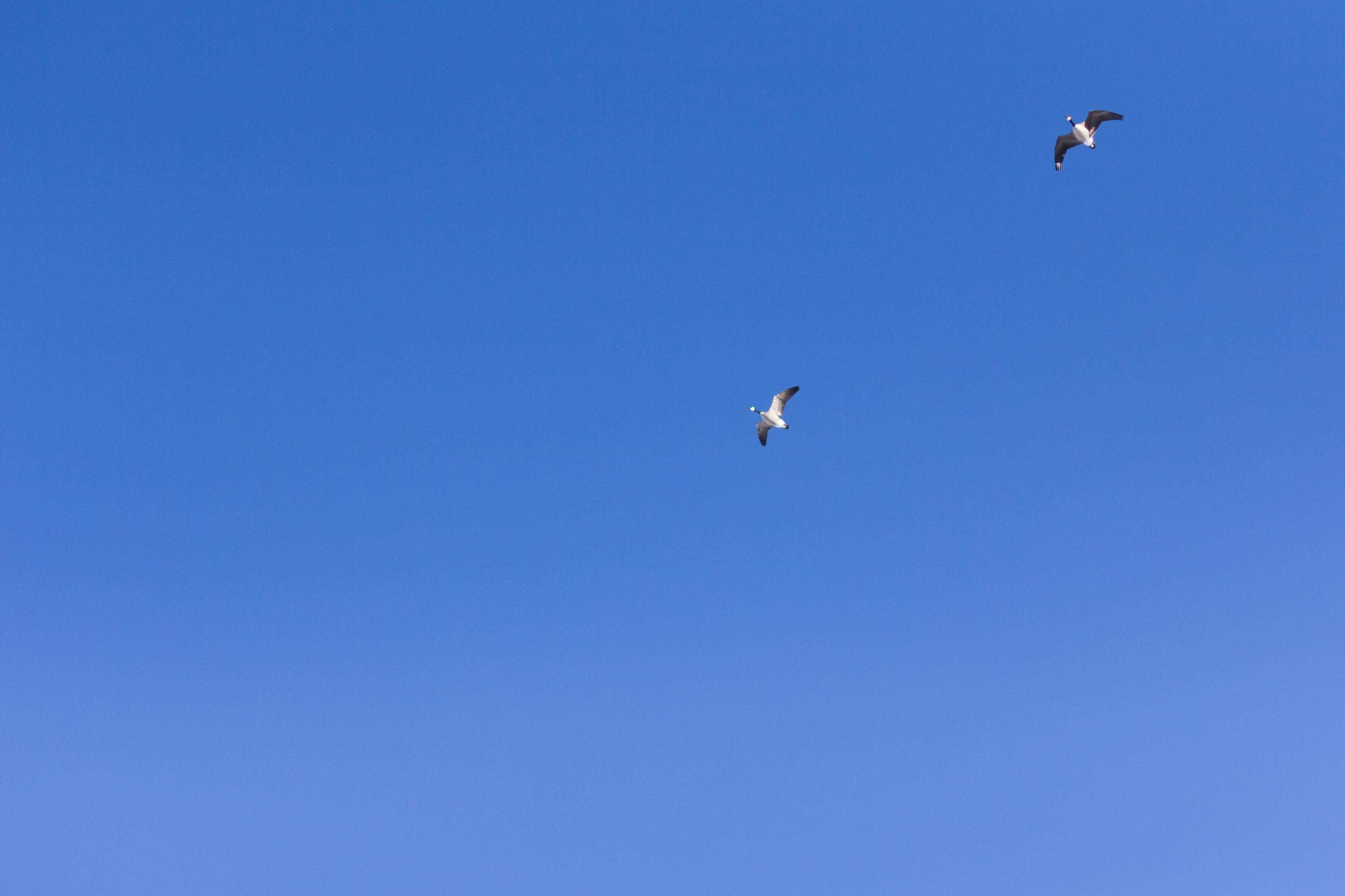 birds flying in clear Colorado skies