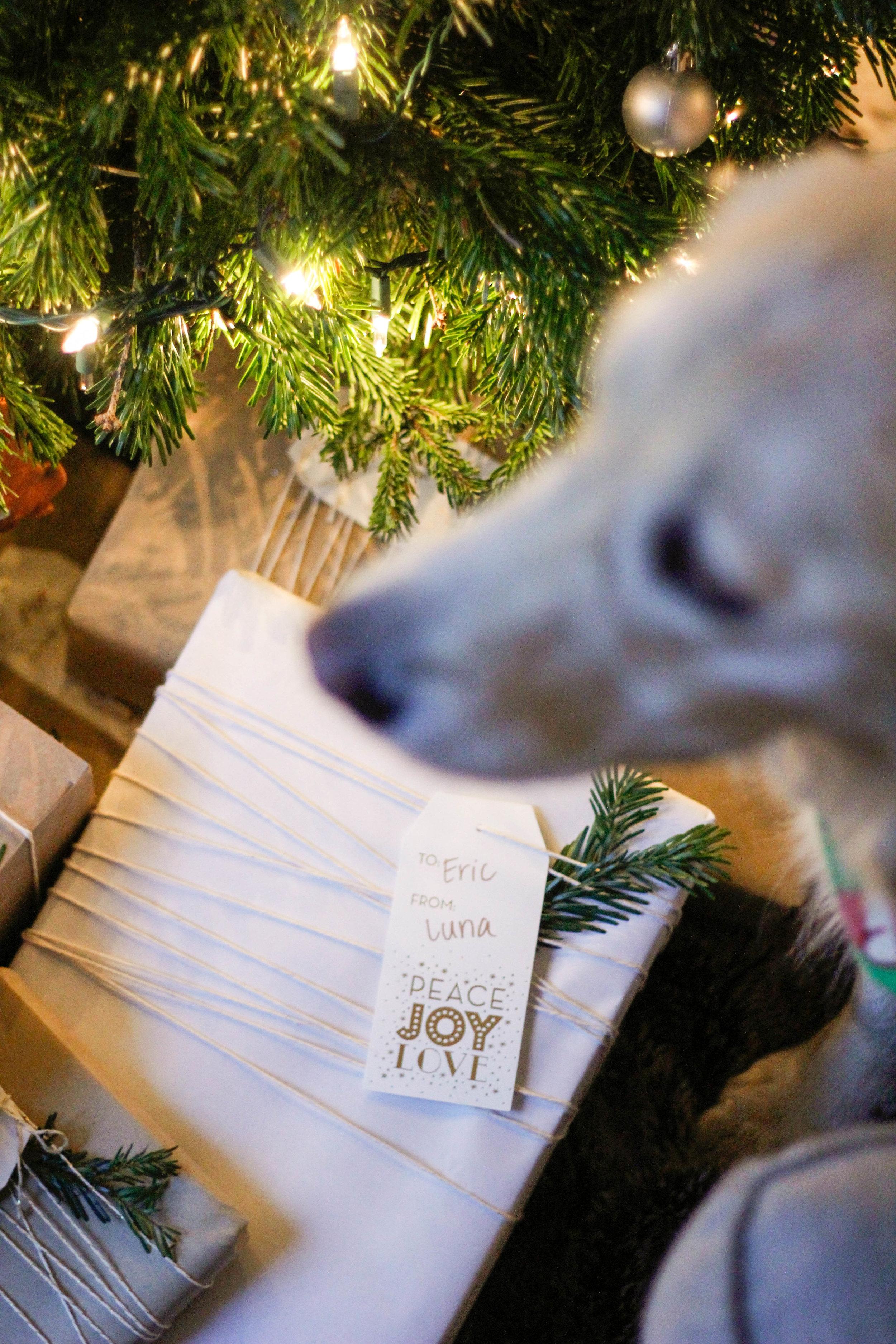 Merry Christmas | Jennifer Diaz