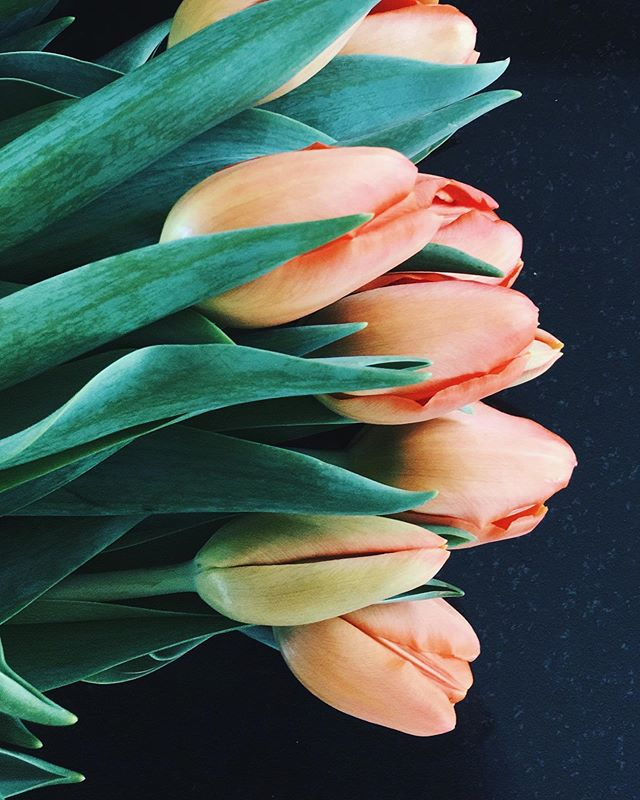 """A tulip doesn't strive to impress anyone. It doesn't struggle to be different than a rose. It doesn't have to. It is different. And there's room in the garden for every flower."" — Marianne Williamson 🧡  Wordddd. Wow did I have need to read those words today (from her book A Return To Love). Shout out to all my wildflowers, sunflowers, peonies, and even friggin carnations! We're all doing our best, and deserve to shine and stand tall exactly as we are ✨"
