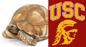 Dr. Craig Stanford's lab at USC is doing work all over Africa with tortoises, including Ploughshares.