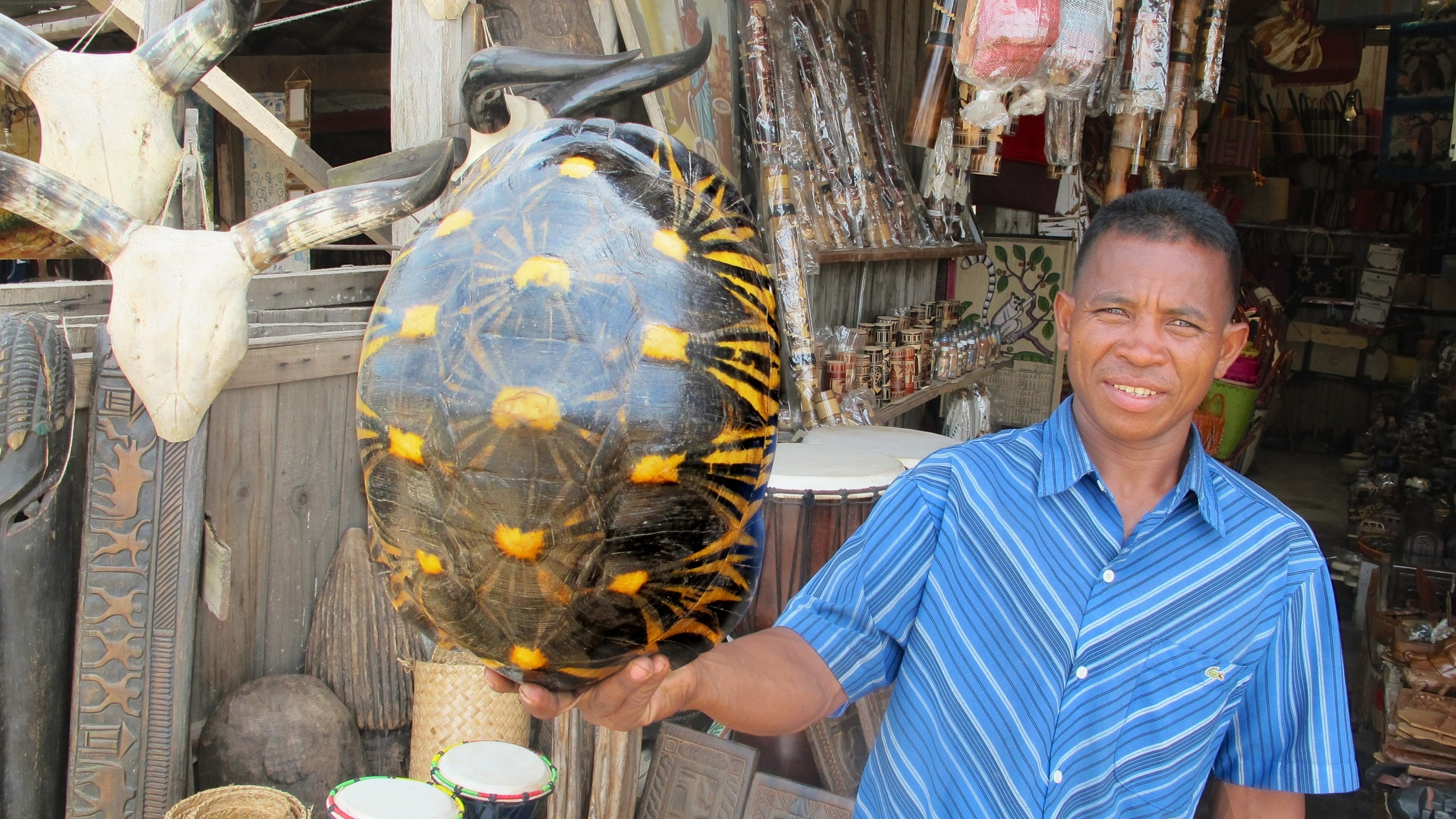 The shell of a Critically Endangered Radiated Tortoise for sale in a tourist market in Antananarivo.