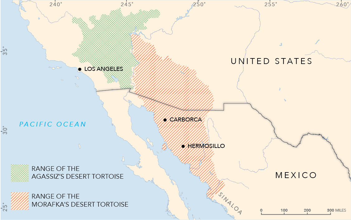 The range of Agassiz's Desert Tortoise and Morafka's Desert Tortoise.