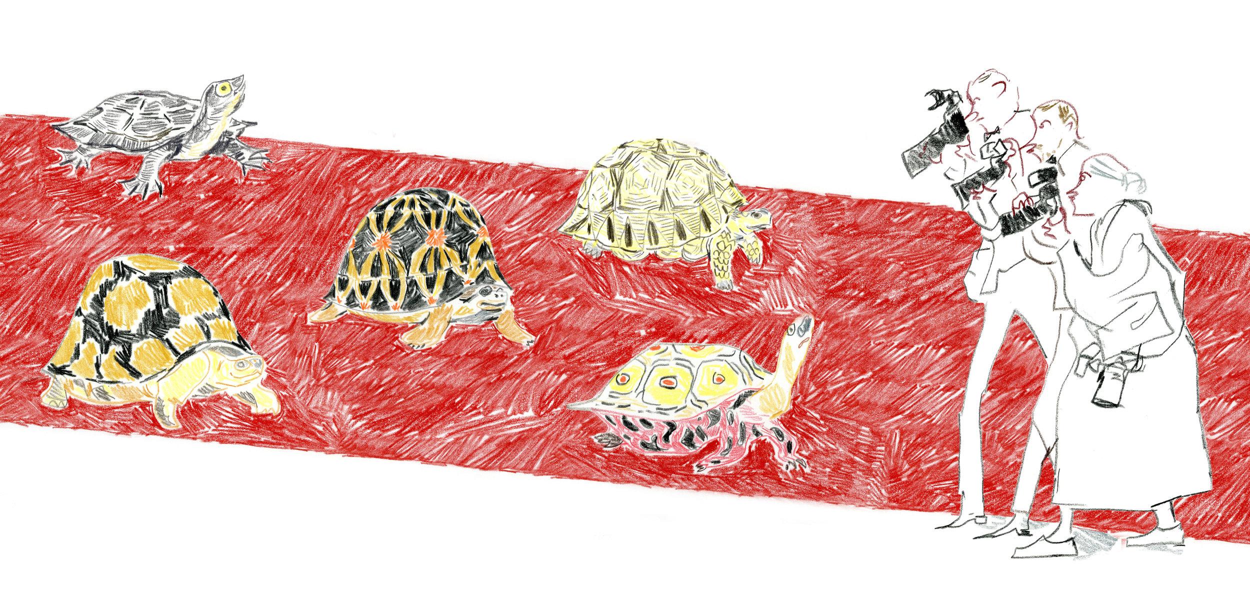 red_carpet_turtles_wide.jpg