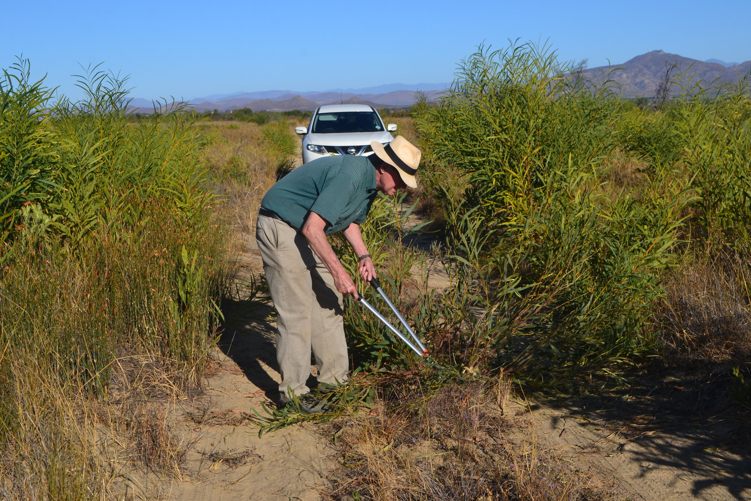 Turtle Conservancy Chief Scientist Ross Kiester in an area full of invading Australian Acacia and fighting back with cutters!