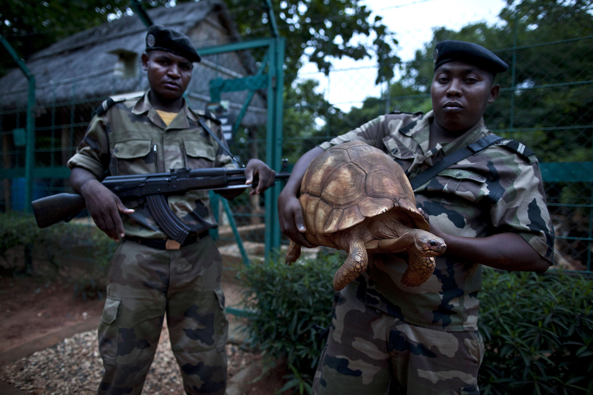 AMPIJOROA, MADAGASCAR - DECEMBER 8: Armed guards secure the fenced tortoise breeding center at Ankarafantsika national park. The center houses many Angonoka (plowshare) tortoises, a critically endangered species of tortoise endemic to Madagascar January 8, 2012 in Ampijoroa, Madagascar. The Angonoka (plowshare) tortoise is a critically endangered species of tortoise endemic to Madagascar. (Photo by Jonathan Torgovnik/Reportage by Getty Images)