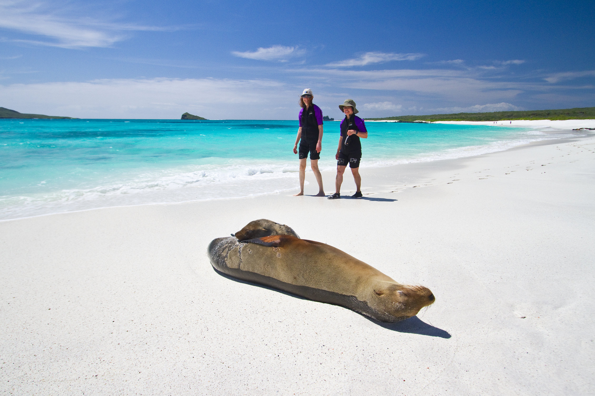 Copy of Copy of Galapagos Sea Lion (Zalophus wollebaeki)