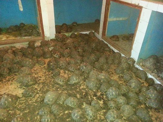 636597441465552606-Tortoises-1.jpg