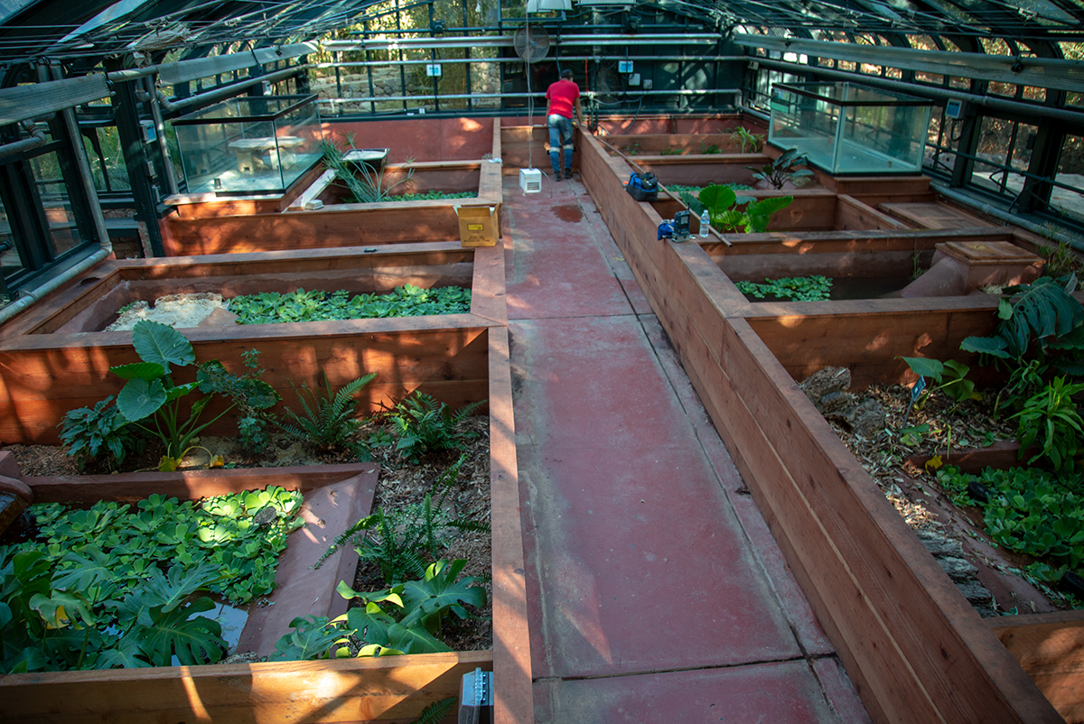 Newly Renovated Greenhouse