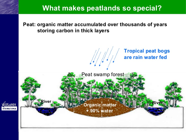 tropical-peatland.jpg